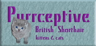 British kittens for sale