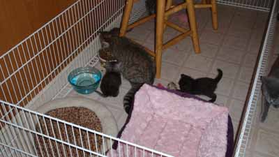 kitten play pen